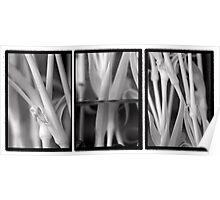Carnation Stems Triptych Poster