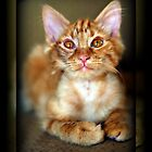 Boo Kitty Update by AngieBanta