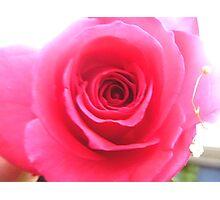 V day rose Photographic Print