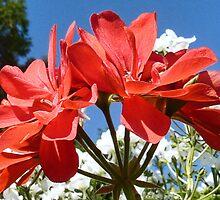 Summer Flowers by lynn carter