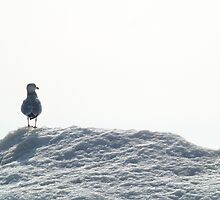 It's Lonely At The Top by BarbL