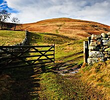 Humbleton Hill, Northumberland National Park. UK by David Lewins