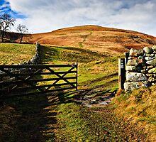 Humbleton Hill, Northumberland National Park. UK by David Lewins
