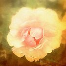 Vintage Rose. by JacquiK