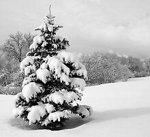 Winter Wonderland by Ken Fleming