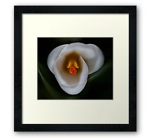 White crocus - simple beauty Framed Print