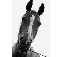 Mr Pony Photographic Print