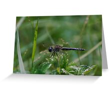 Charcoal dragonfly sunning Greeting Card