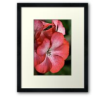 With Petals Framed Print