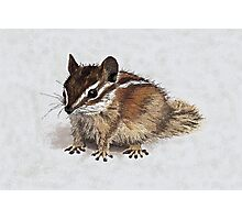 Charlie Chipmunk Photographic Print