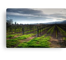 January Vineyard Canvas Print