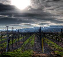 Dark January Vines by Rachael Towne