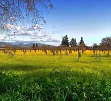 Ethereal Vineyard HDR by Rachael Towne