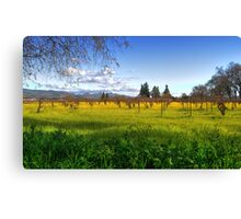 Ethereal Vineyard HDR Canvas Print