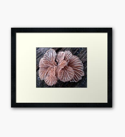 NATURE'S JEWELRY - SHELF FUNGUS GILLS Framed Print