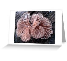 NATURE'S JEWELRY - SHELF FUNGUS GILLS Greeting Card