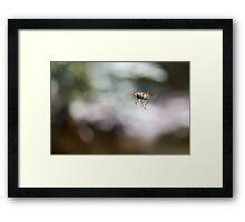Full Flight Framed Print