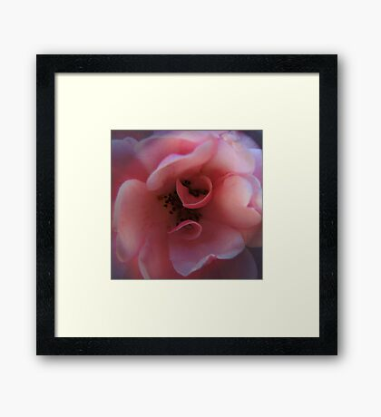 Rose Tone Framed Print