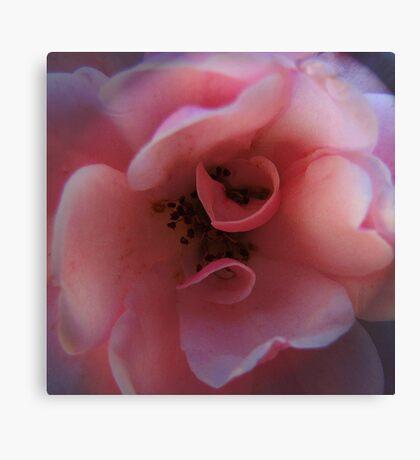 Rose Tone Canvas Print