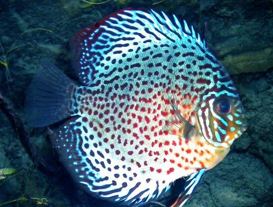 Pretty Fish Photo Colette Guggenheim By Colette Hera