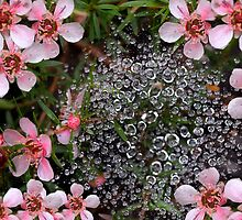 raindrops on a spider web by thelense