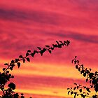 Leaf Framed Sunset by Amy Dee
