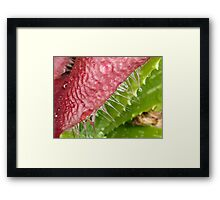 The Flower of a Cactus Plant Framed Print