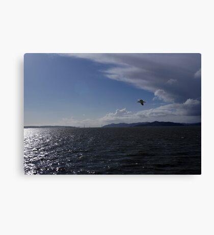 San Francisco Bay Seagull Canvas Print