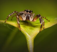 Mr Bright Eyes by Barb Leopold