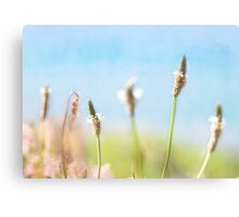 Grass On A Cliff Top Canvas Print