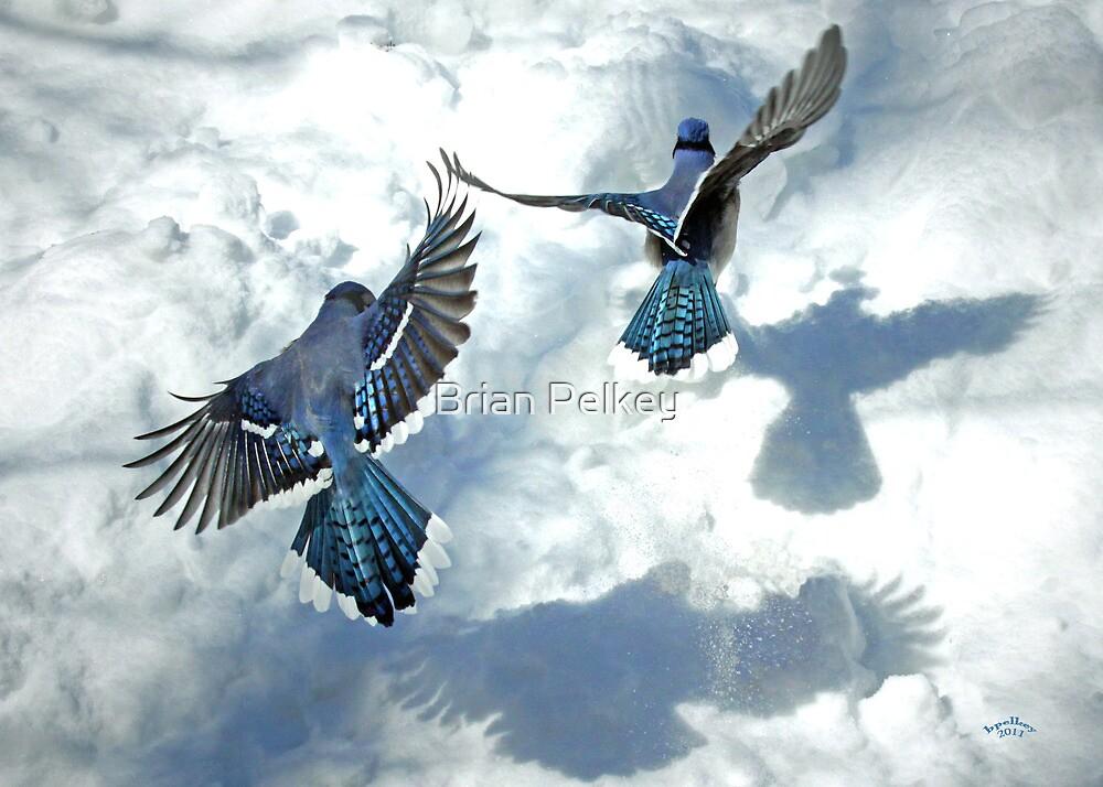 Sunny Jays by Brian Pelkey