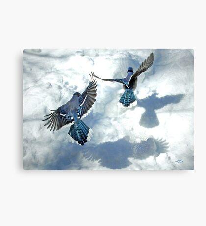Sunny Jays Canvas Print