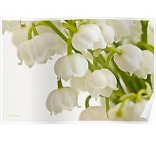 Lily Of The Valley - Macro  Poster
