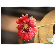 Fading blooms of fall in red Poster