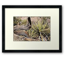 Natural Still Life Framed Print