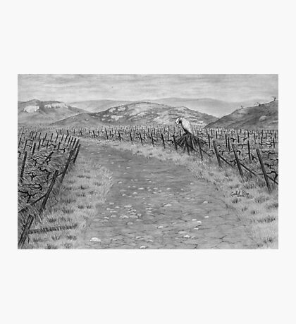 T0002 Vineyard R01 Photographic Print