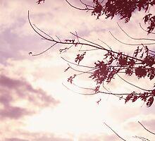 Lori Wells Photography-Beautiful Pink Sky  by loriwellsphoto