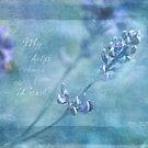 Wild Alfalfa by JulieLegg