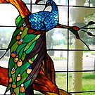Bird in a Glass Window by David Davies
