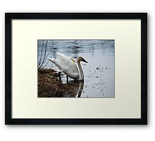 Gracie... Going for a Dip! Framed Print