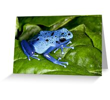Blue Dart Surprise Greeting Card