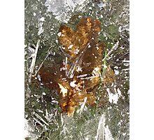 Autumnal Stasis Photographic Print