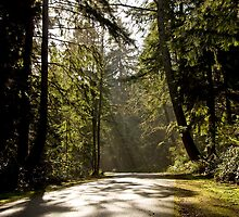 Point Defiance Park / 5 Mile loop by DiamondCactus