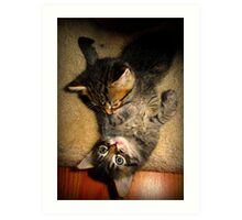 Two Beautiful Kittens Playing with Eachother Art Print