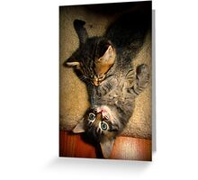 Two Beautiful Kittens Playing with Eachother Greeting Card