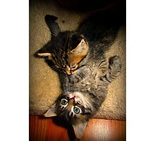 Two Beautiful Kittens Playing with Eachother Photographic Print