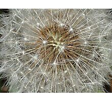 Make a Wish or Weed? Photographic Print