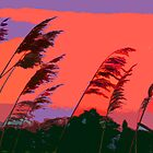 GRASSES AT SUNSET by gailflipper