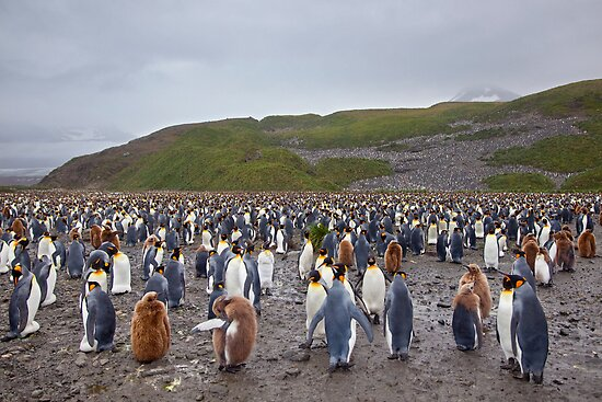 So where are the Penguins? by Krys Bailey