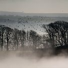 Trees above the Mist (Original Version) by mikebov